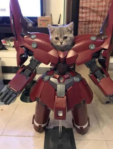 给软萌的猫咪买了套衣服,直男们看到都要跪拜!简直帅爆了