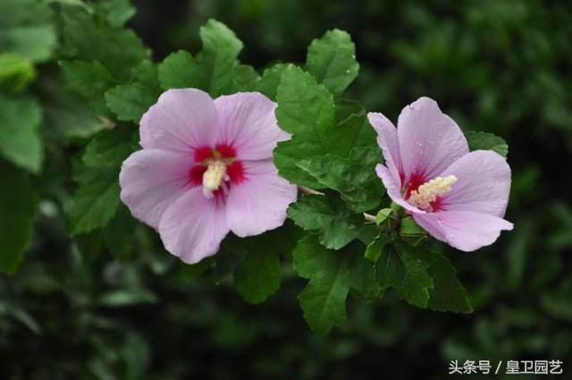 中秋前种植这3种花,种一盆,活一盆