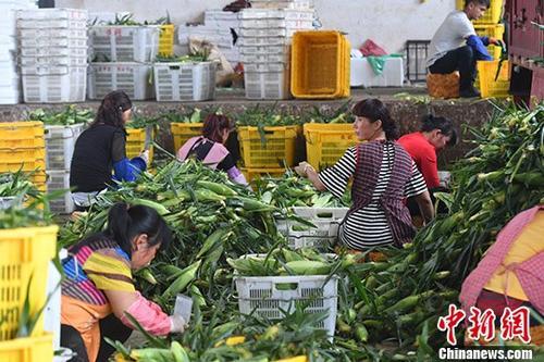吉炳轩:农产品质量安全基础薄弱 要加强全程管控