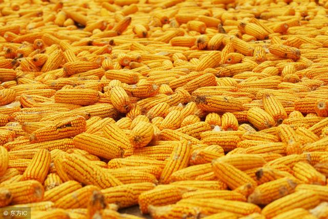 我国五年不进口美国玉米 价位依然难以达到1.5元/斤