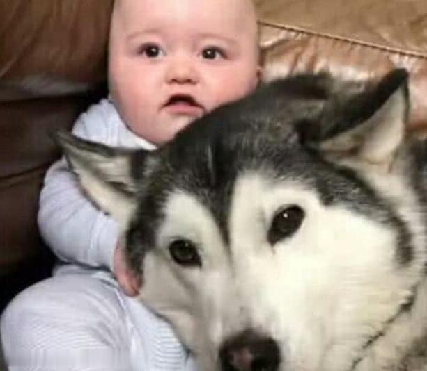 主人让哈士奇照看小宝贝,结果听到哭闹声进来一看,气坏铲屎官!