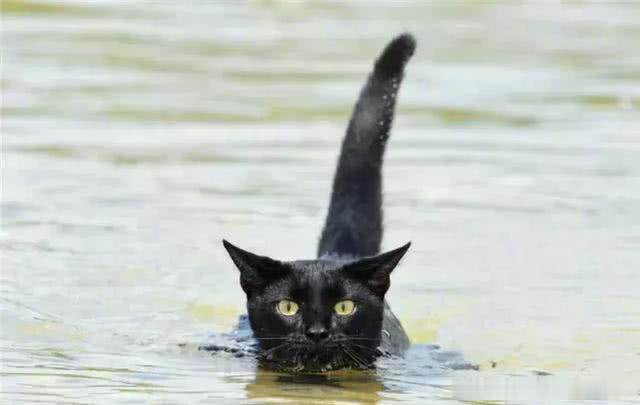 猫咪克服了恐惧学会了游泳,陪着