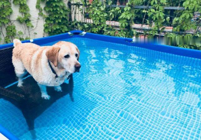 天气太热了,欢快游泳的狗子,很凉爽呦