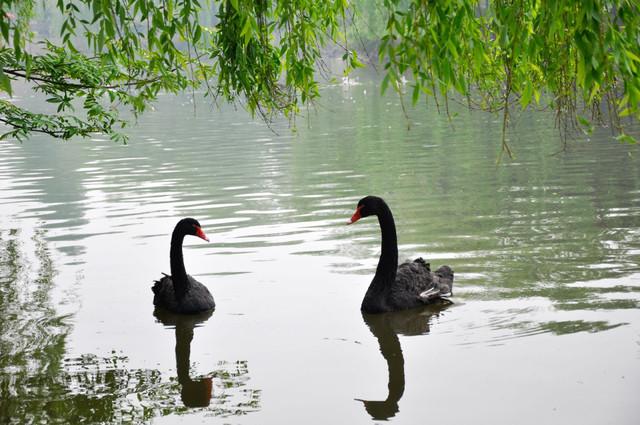 懒洋洋的上海野生动物园