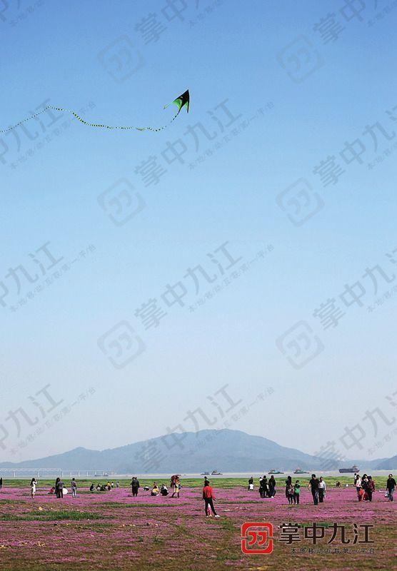 鄱阳湖花海今年为何如此壮观?专家这么说