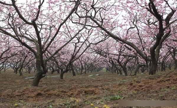「必威体育在线客服」秋冬季苗木栽植务必做到这几点!