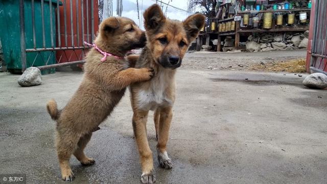 农村土狗有额头上有根竖纹,人也有,叫悬针纹,有什么说法吗
