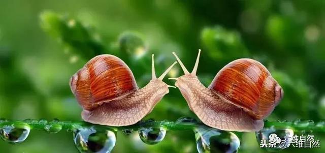 """独特的蜗牛,住得""""房子""""都是豪华别墅!"""