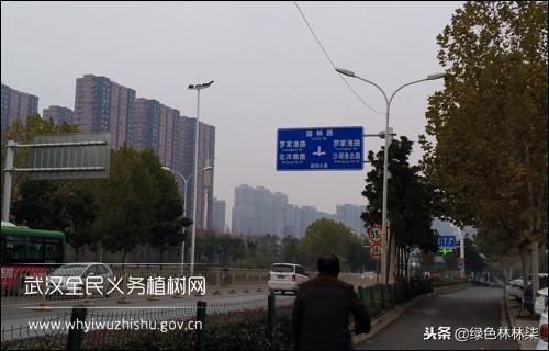 武汉花市(五):武汉最大苗木集散中心,进来了解一下!