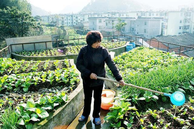 入伏后菜园子别空着,种植这几种蔬菜,秋天蔬菜吃不完
