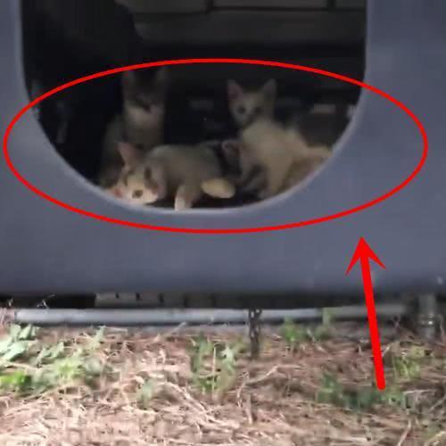 发现一只流浪猫模样可怜,搞清楚情况后,却又不厚道地笑了出来