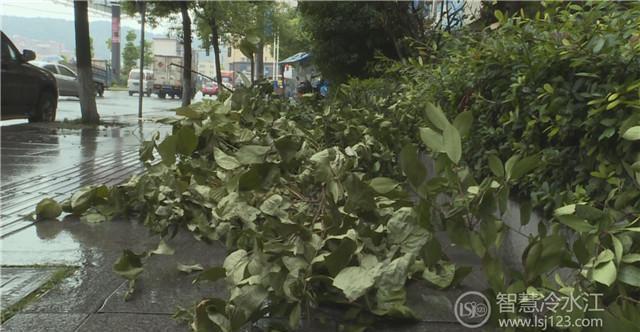 扩散|冷水江一市民因肆意破坏绿化苗木被移送公安机关