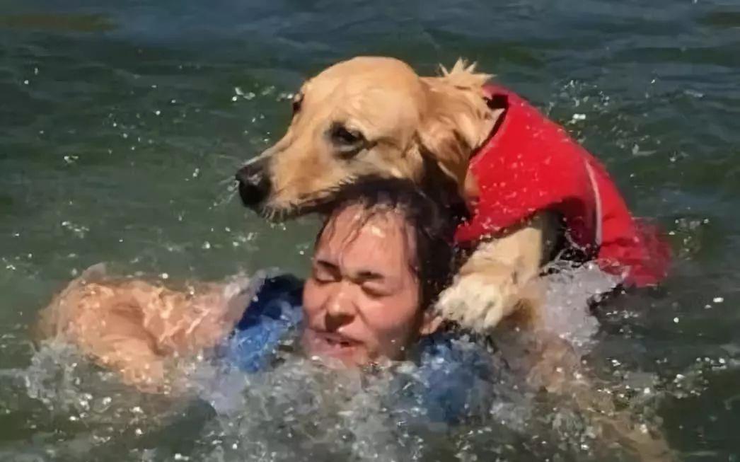 被恶作剧的狗狗反击,游泳时使劲将铲屎官摁