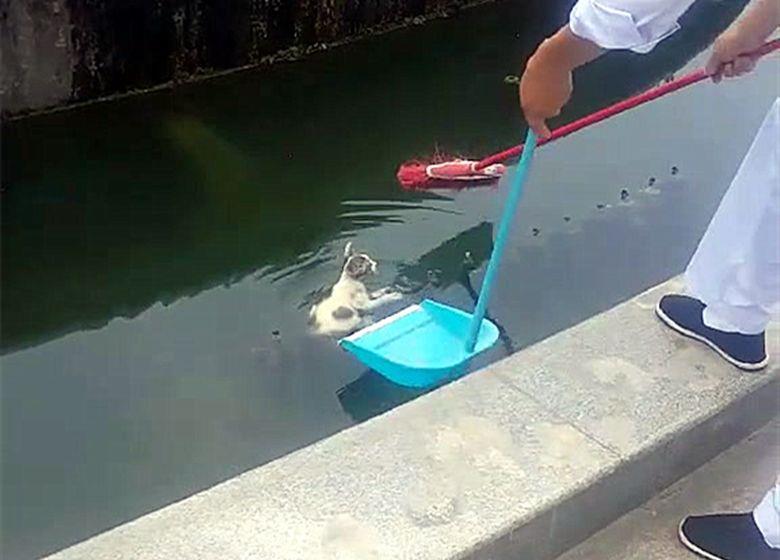 猫被狗追的掉进水里,看到有人救自己立刻抓着不放:我不会游泳