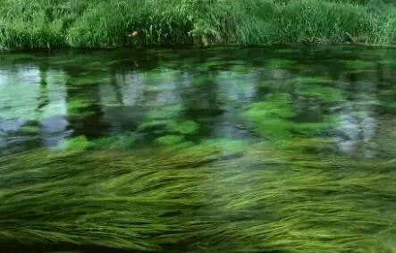 孩子下河游泳溺水身亡,村民认为河里有水鬼