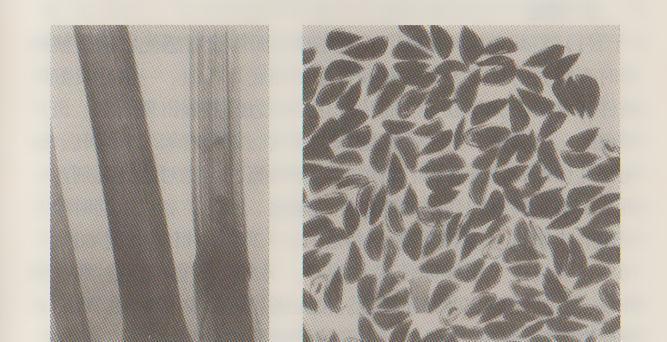 X光检验种子和苗木的基本知识