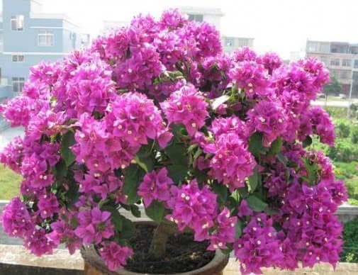 """家里就养这""""4种花"""",漂亮好养又便宜,四季开花不断,满屋飘香"""