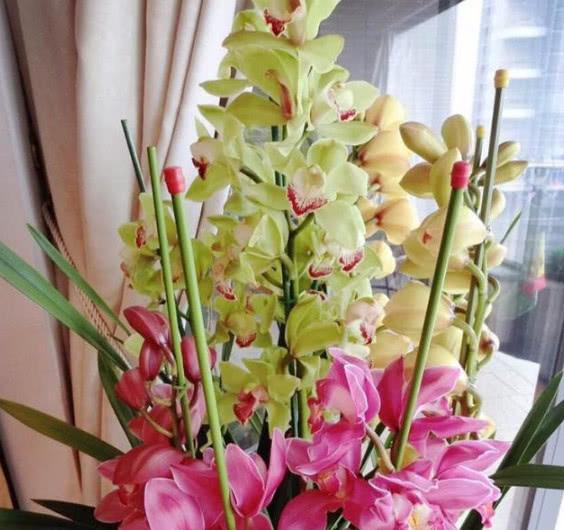 """""""6种""""最适合养在家里的花,漂亮贵气又好养,四季开花不断,美"""