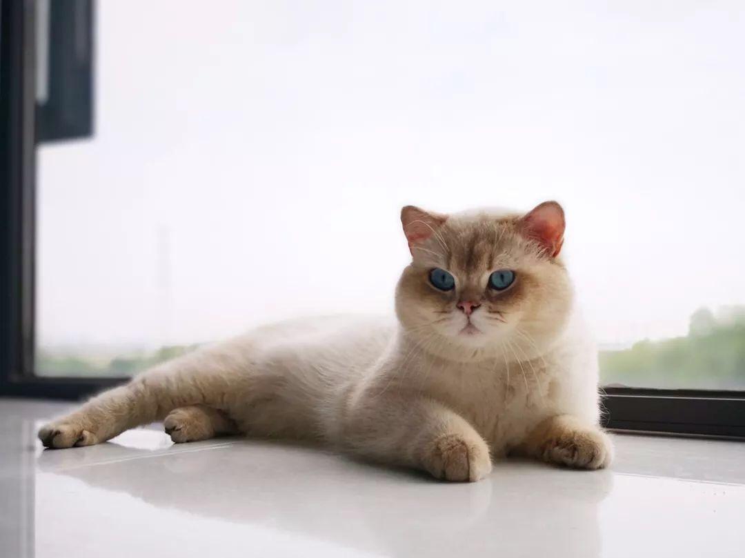 <b>你真的了解猫传腹吗?</b>