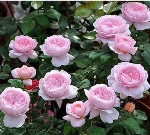 """""""4种花""""好养易爆盆,花期特别长,年年开花不断,越养越喜欢!"""