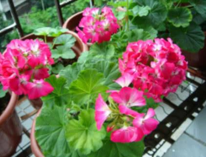 """三伏天养花,做好""""4个关键点"""",不烂根黄叶,花卉0伤亡,变高手"""