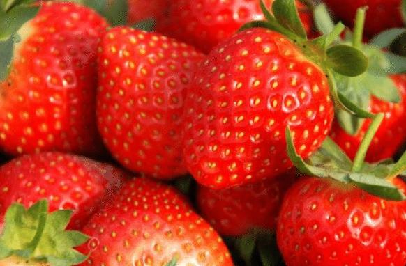 <b>南方有种水果,长得像草莓却比草莓还好吃,如今想吃都难买到</b>