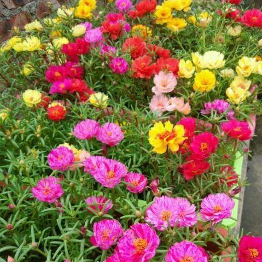 """""""5种花""""好养又便宜,扔土里就开花,一开就是300多天,美爆阳台"""