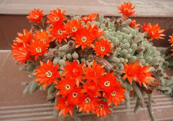 """最适合懒人养的""""4种花"""",漂亮好养,一个月不管,花开满盆,美"""