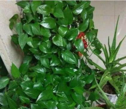 """想要花卉长得旺,就用""""4种水""""来浇,不黄叶、不生虫,简单实用"""