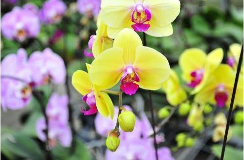 5种超漂亮的花,花卉中的佼佼者,谁看见都想养,花开不断,美