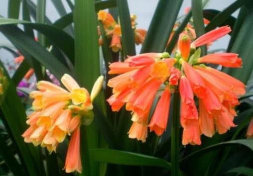 """""""4种""""垃圾不要扔,撒在花盆里,不烂根、不生虫,花卉长得旺!"""