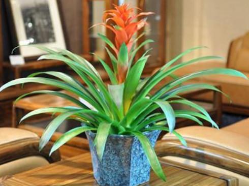"""""""4种花""""寓意美好,净化空气,美化家居,漂亮又好养,开花不断"""