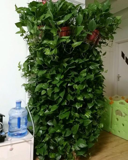 <b>养花不见得要养昂贵的,养几盆便宜的植物,反而能养得更好</b>