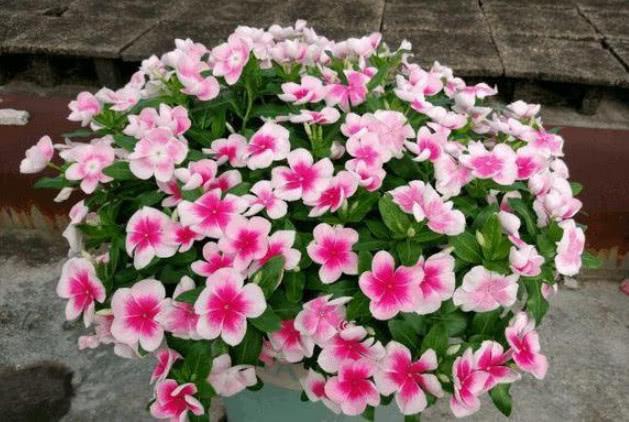 """""""4种花""""超爱开花,漂亮又好养,全年开花不断,尤其第2种,美!"""