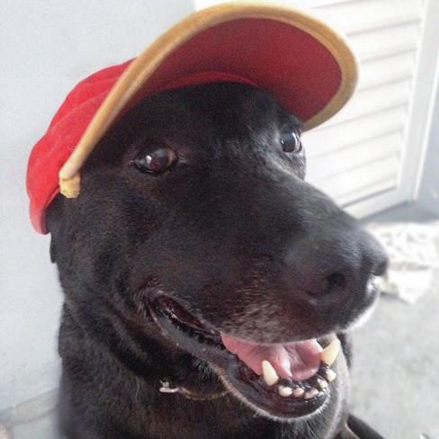 狗狗被主人抛弃后,在加油站找了份正式工作