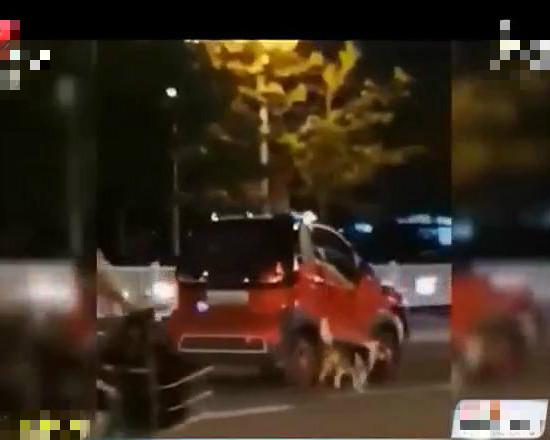 女司机马路上神操作,开着汽车来遛狗,妨碍交通安全被处罚