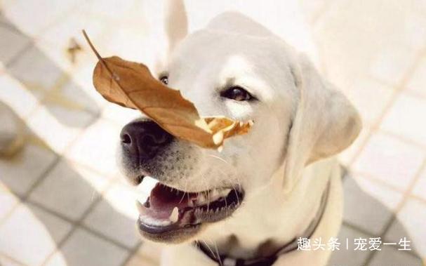 <b>主人狠心离开40天放任宠物自生自灭,狗狗却因此开启幸福之门</b>