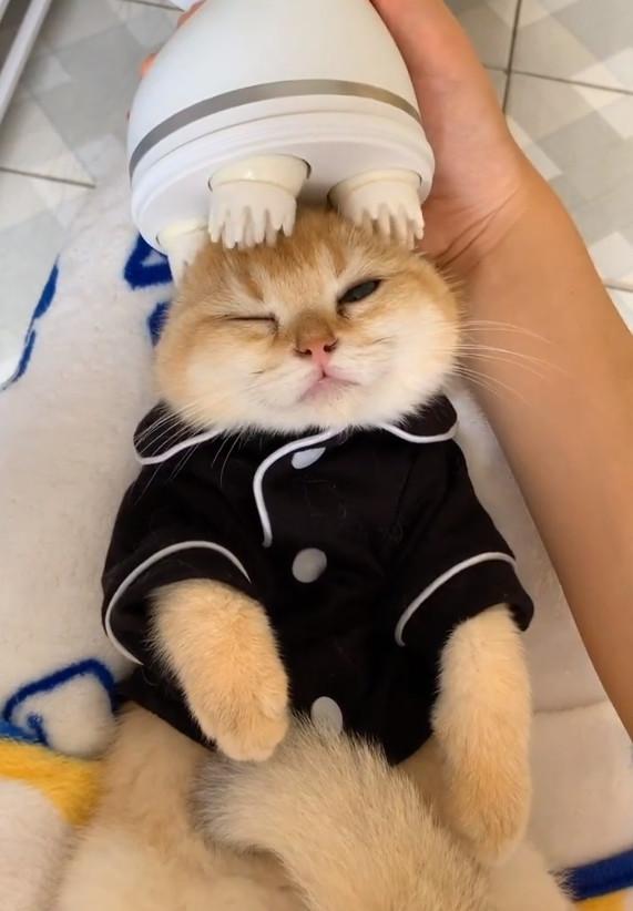 橘猫舒服地享受按摩服务,网友:太幸福了,下辈子做只猫吧