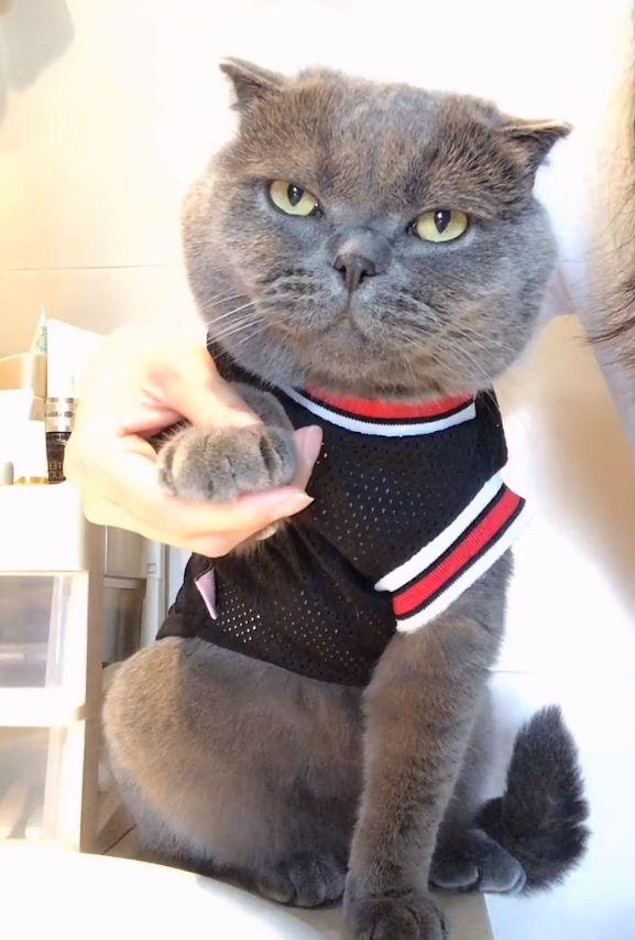 宠主给猫咪剪指甲,猫咪不情不愿,它犀利的眼神让人害怕