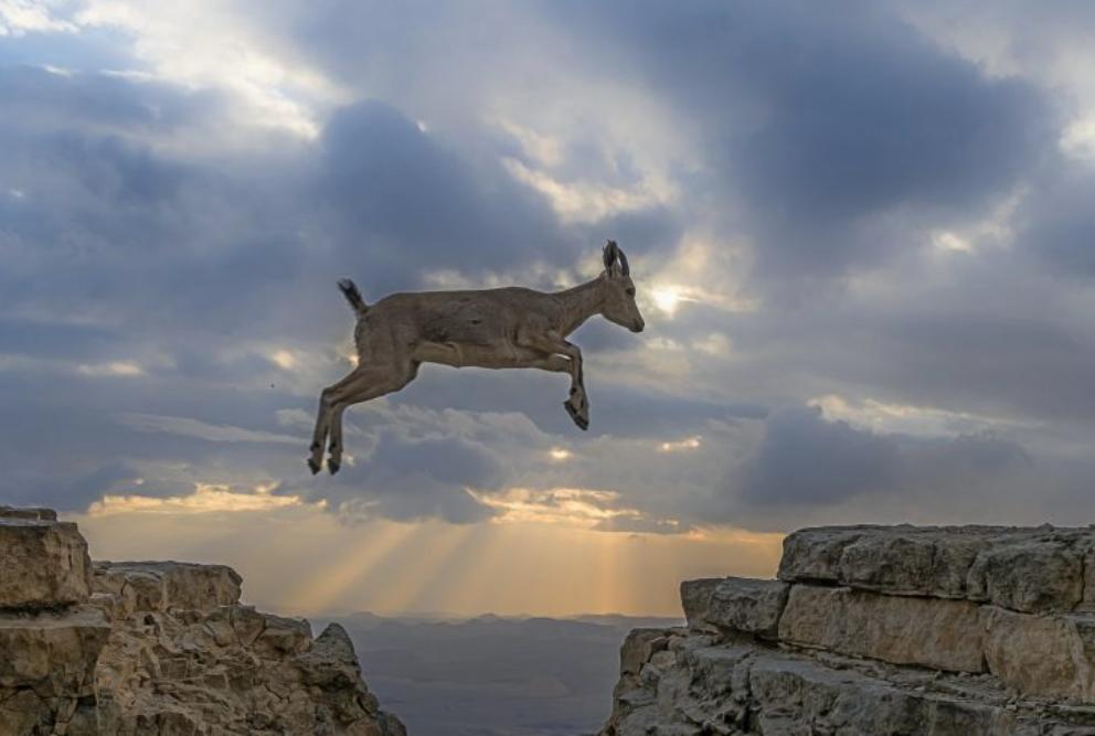 超级厉害!一群山羊伴随着沙漠日出,跳跃山崖岩石