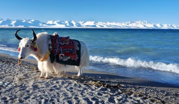 旅摄探秘:西藏藏北高原,文部湖水怪是否真的存在?