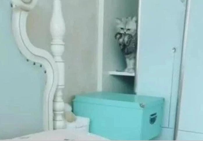 主人刚换好新床单,猫咪就把小猫咪放床上,主人当场笑喷