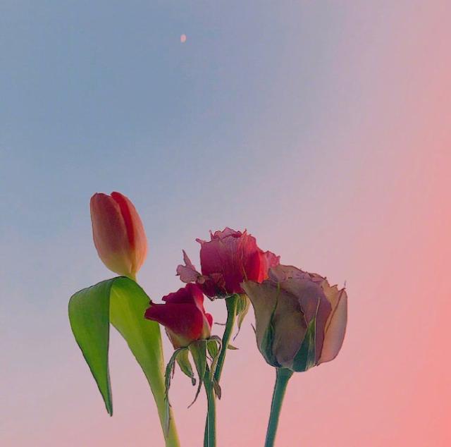 早晨发朋友圈的短句,愿你爱上现在,梦见未来