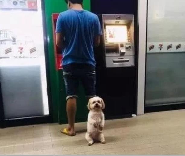 主人到取款机取钱,小狗狗的动作,让人笑喷了