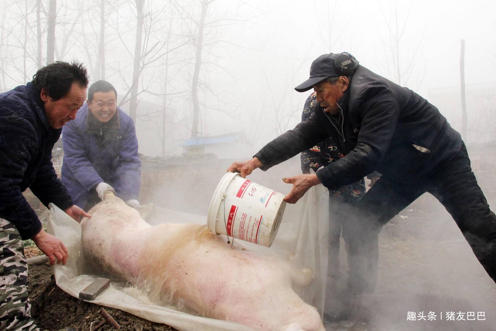 农村那些杀猪匠,明明外部很瓷实,为啥大多活不过五六十岁呢?