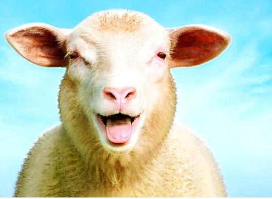 心理学:哪个动物最搞笑,测出这个秋天你有啥好事让你笑逐颜开