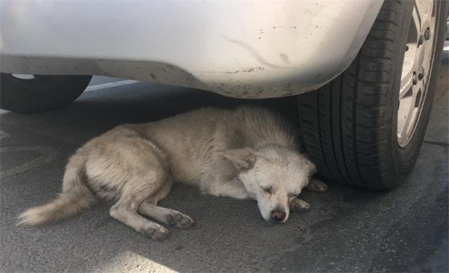 好心人遇到流浪狗,没地方养,在公司角落处给它搭了个窝