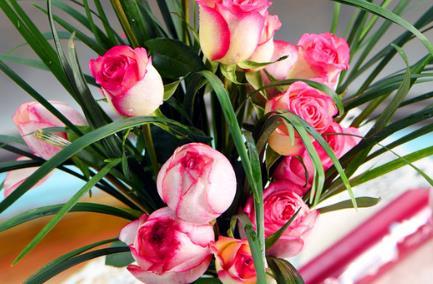 喜欢养花,不如选他们,花语:红颜知己,花姿妩媚,花开娇艳动人