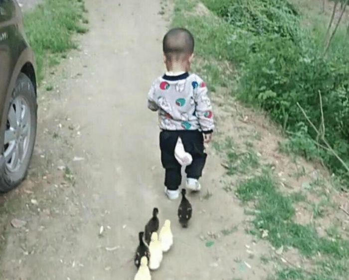 3岁宝宝吃完饭说要带鸭子去散步,宝妈跟过去一瞧,笑得合不拢嘴