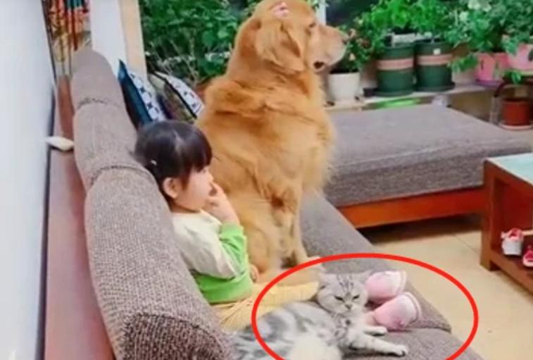 女儿带着猫狗看电视,不断喂狗狗吃零食,猫咪一旁的表情笑喷